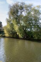 Some Trees by the River by TheBigDaveC