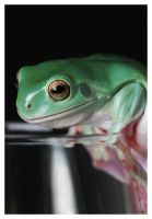 Frog1 by robfo0