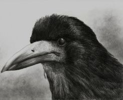 The Rook by Mihin89