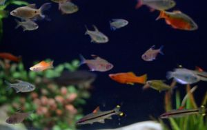 Fish Gallery Tropical Treasure Crop by jfahrlender