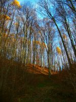 In the Colour of Autumn by Nusio21