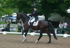 Dressage Canter Stock 01 by LuDa-Stock