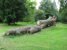 Nature 236 tree trunk by Dreamcatcher-stock