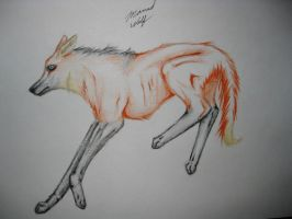 Maned Wolf by TheNewCoyote