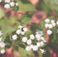 Fall Wildflower 2 by miss-masami