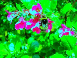 Psychadelic bee by serialphotographer