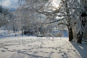Snowy trees by lhauert