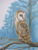 Barn Owl by life--in-technicolor