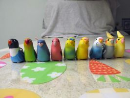 Kitan Club collection pet birds by Sorath-Rising