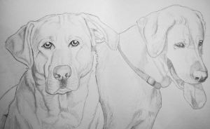 Pet Portrait: Sunny and companion by SeraphSisters