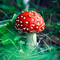 fly agaric by oxygen2608