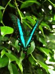 butterfly 38 by Pagan-Stock
