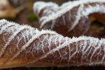 Frosty morning bliss by SarahharaS1