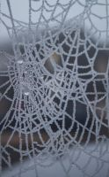 Frosted Web by johnford101
