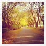 Autumn instagram by clarasaenz