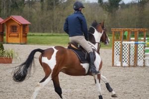 Pinto horse - Show jumping stock 3.6 by MagicLecktra