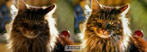 Cat With Sun Back Lighted 2 Minute Retouch by kerimheper