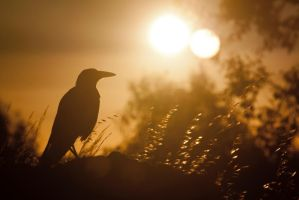Magpie Sunset by WiseWanderer