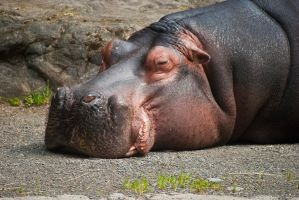 Hippo Hates Mondays by Mad-Willy