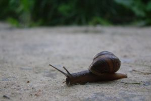 Little snail 10 by Panopticon-Stock