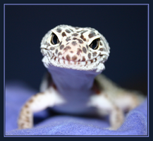 Grinning Gecko by FizzyChameleon