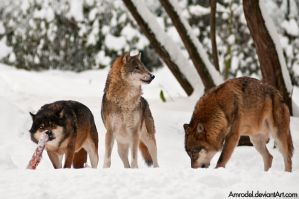 Life in Wolf Pack II by amrodel