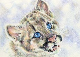 10.7 Cougar Cub by theperian