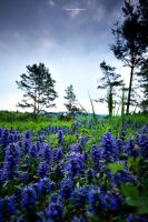 Blue Meadow by DREAMCA7CHER