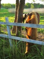 Is the grass really greener on the other side? by Luddox