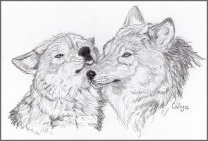 Two Wolves by Cally-Dream