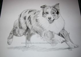 Aussie Sheppard by FlyingFancy1