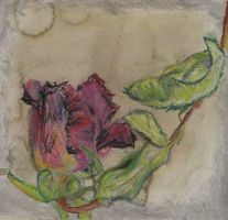 A Dried Up Rose for Funeral by jassele