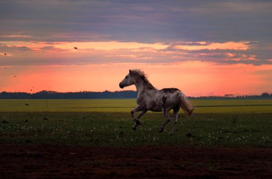 Evening after the Storm by wildhorsedreams