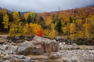 White Mountains  Fall Foliage  025 by FairieGoodMother