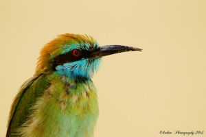 green bee eater by kimpy23