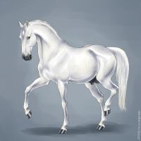 Andalusian by scargeear