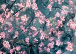 Lush Cherry Blossoms by Zophic