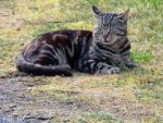 Domestic Wild Cat.. by Alz-Stock-and-Art