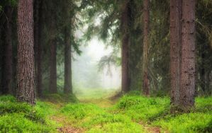 Misty Woods II by JoniNiemela