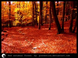 Red autumnal Forest by Prevention