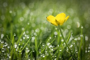 walk me out in the morning dew... by clochartist-photo