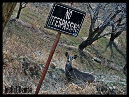 No Trespassing by InuHalfDemon