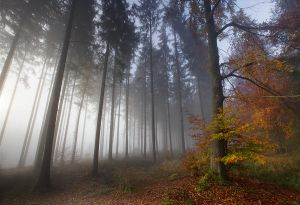 Foggy Forest II by ~vamosver