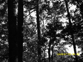 Trees black and white by Rindelle