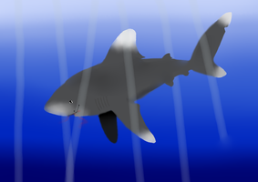 Oceanic whitetip by Mimiiz
