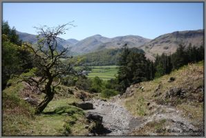 Borrowdale Valley by Rebacan