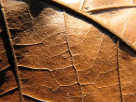 Leaf Texture 2 by MissyStock