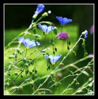 .Flax. by StarStruckMiracle