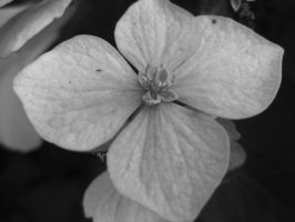 Colorless by DanikaMilles