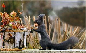 squirrel by brijome